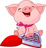 Pretty pig at Valentines Day. Cute pretty pig at Valentines Day with chocolates Royalty Free Stock Image