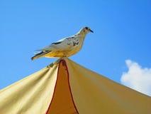 Pretty pigeon - sky background Royalty Free Stock Photo