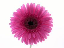 Pretty in pink stock photography