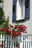 Pretty in pink. A fence surrounded by roses in front of a house stock image
