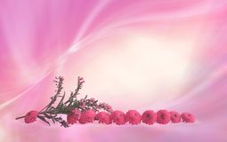 Pretty Pink flower heads border frame. Sprig of meadow flowers and 10 small pink flower heads in a neat row with a pink flowing linear border frame background stock photos