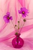 A Pretty Pink Flower in Vase Royalty Free Stock Photography