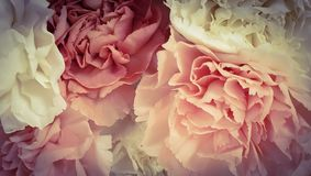 Pretty pink peony petal flowers background. Pretty peony petal flowers background wallpaper royalty free stock images