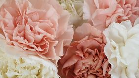 Pretty pink peony petal flowers background. Pretty peony petal flowers background wallpaper stock photos