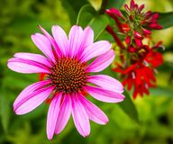 Pretty in pink. Pink petaled flower Stock Photos