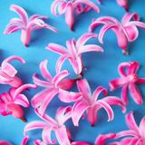 Pretty pink petals Royalty Free Stock Images
