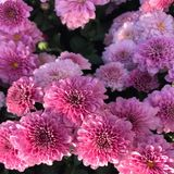 Pretty pink petals stock photo