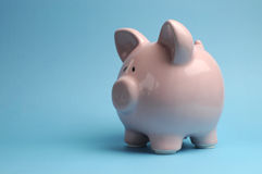 Pretty pink piggy bank against a blue background Stock Images
