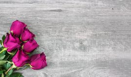 Pink Roses Over Rustic Wooden Background. Pretty Pink Roses Over Light Rustic Wood Background, Horizontal, Copy Space stock illustration