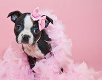 Pretty In Pink Royalty Free Stock Photography