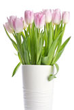 Pretty Pink Tulips Royalty Free Stock Image