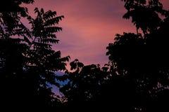 Pretty pinks Stock Image