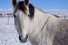 Pretty Pony Royalty Free Stock Images