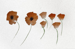 Pretty poppy watercolour Stock Photos