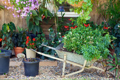 Pretty potted plants Stock Photos