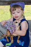 Pretty in purple child and chihiahua pet royalty free stock photography