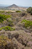 Small purple flowers form a natural ground cover, Paros, Greece. Pretty purple flowers of a low-growing shrub provide some colour along the Old Byzantine Path stock images