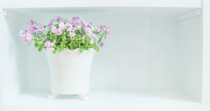 Pretty purple flowers in white pot on shelf.  Light floral Home decoration Stock Photography