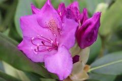 Pretty in purple too stock image