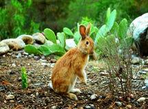 Pretty rabbit chews a bush. Royalty Free Stock Photos