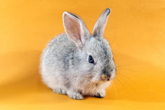 Pretty rabbit Royalty Free Stock Photo