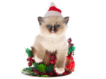 Pretty Ragdoll kitten in large xmas cup. Cute Ragdoll kitten sitting inside large cup with christmas decorations wearing santa hat, on white background Royalty Free Stock Image