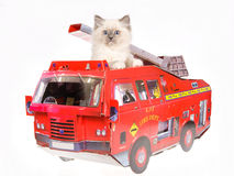 Pretty Ragdoll kitten in red fire truck Royalty Free Stock Photo