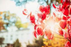 Pretty red autumn foliage with sunlight at fall day background Stock Photo