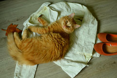 Pretty red cat on the cloth. Stock Photography