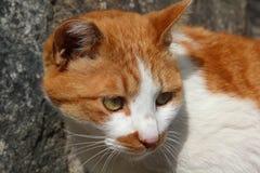 Pretty red cat Stock Photo