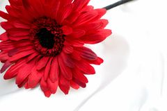 pretty red flower on silk Royalty Free Stock Photo