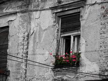 Pretty red flowers on a window on a old house royalty free stock images