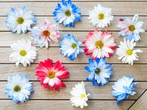Pretty Red White and Blue Patriotic Colored Daisy Flowers Scattered on a Wood Table Background.  It`s a horizontal photo with fla. T layout shot from above Royalty Free Stock Image