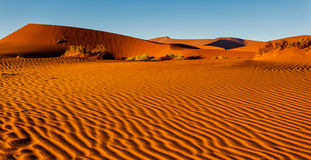 Pretty rippled pattern of blown sand on Namibian desert floor. Pretty rippled pattern of blown sand on desert floor leads up to high dunes in background in the Royalty Free Stock Photo