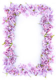 Pretty romantic lilac frame Royalty Free Stock Photos