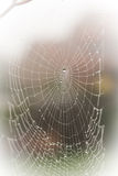 A pretty scary frightening spider web for halloween Stock Photo