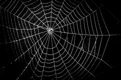 A pretty scary frightening spider web for halloween Stock Photography