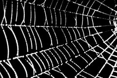 A pretty scary frightening spider web for halloween Royalty Free Stock Photo