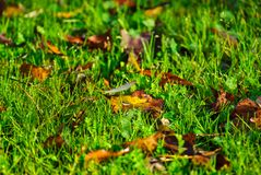 Pretty scene with green grass and autumnal leaves stock images