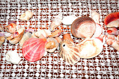 Pretty Sea Shells on Lace Royalty Free Stock Photos