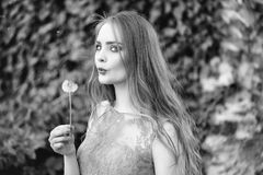 Pretty girl with dandelion flower. Pretty sexy woman or girl with cute face and long hair in fashionable blue dress holding dandelion flower sunny outdoor with Royalty Free Stock Photography