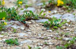 Pretty shades of different color dragonfly sits on on the road Stock Image