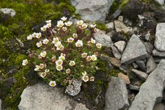 Pretty small flowers blooming in Norway. Some of the pretty small flowers that are beautifully blooming in Norway Stock Photos