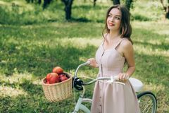 Pretty smiling woman in dress holding retro bicycle with wicker basket full of ripe apples. At countryside royalty free stock photography