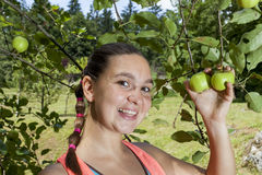 Pretty smiling young woman picking green organic apples Royalty Free Stock Images