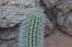 Pretty Spikey Cactus in the Desert of the Midwest Royalty Free Stock Photo