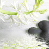 Pretty spray of white spring flowers over water Royalty Free Stock Photos