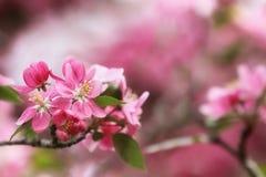Pretty Spring Blossoms Stock Photo