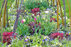 Pretty spring flowerbed Royalty Free Stock Photo