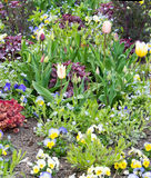 Pretty spring flowerbed Royalty Free Stock Image
